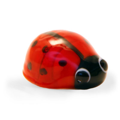 glass-ladybird